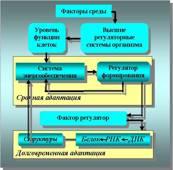 Схема клеточного звена