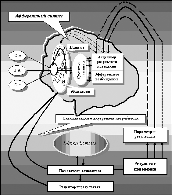 1. Рисунок 8. Принципиальная схема функциональной системы с её центральной архитектоникой по П.К. Анохину и К.В...